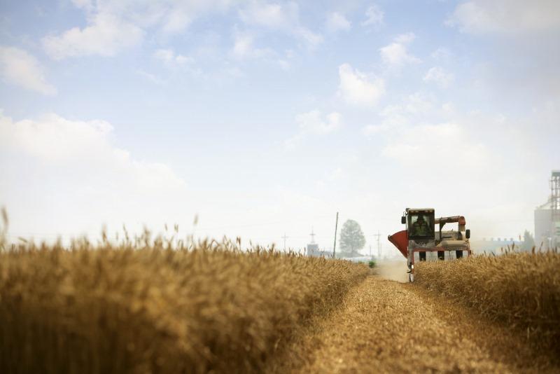 0. 밀밭.jpg